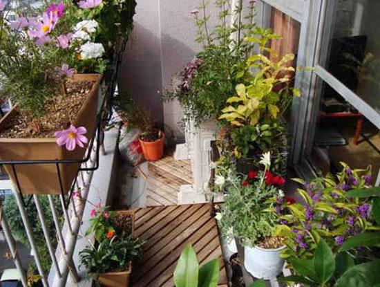 Сад на балконе.