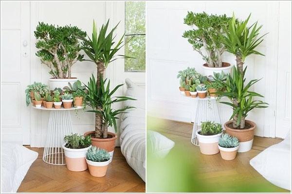 Khi trưng bày cây xanh trong nhà cần lưu ý đến một số điều